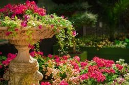 3 astuces pour un jardin fleuri !