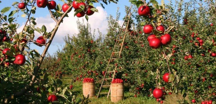 Comment donner facilement du style à votre jardin ?
