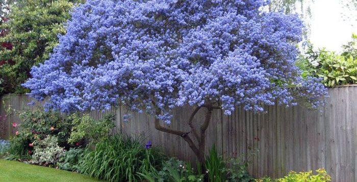 3 arbustes de jardin qui vont changer votre extérieur