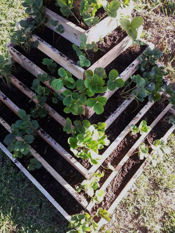 fontaine fraise jardin