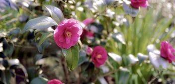 5 Idées de plantes pour un jardin japonais