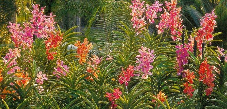 Des orchidées de l'autre bout du monde à découvrir