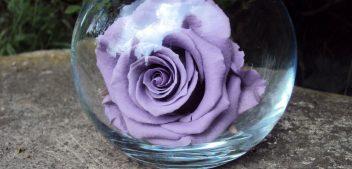 Incroyable : des roses qui ne fanent pas